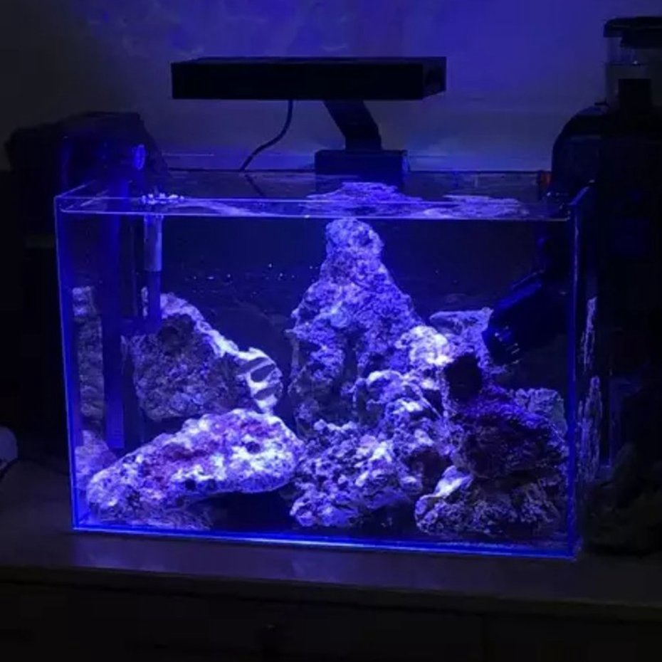 Sale Led Aquarium Light Fish Tank Lighting With Touch Control For Coral Reef Shopee Malaysia