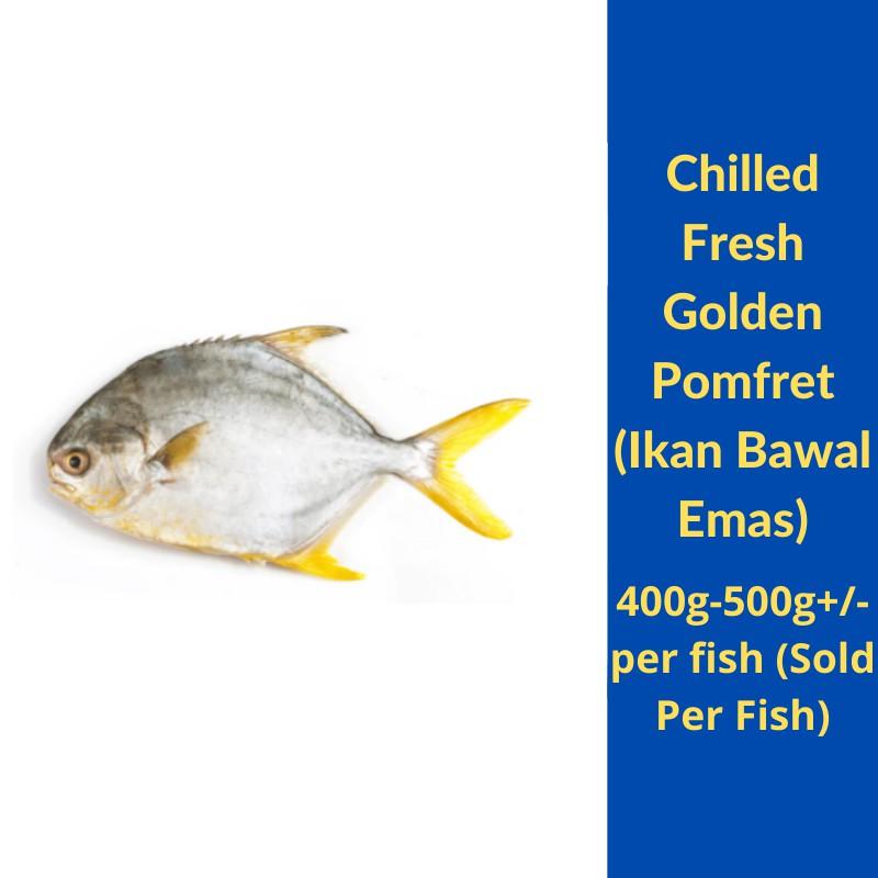 Chilled Fresh Golden Pomfret Ikan Bawal Emas 400g 500g Per Fish Sold Per Fish Shopee Malaysia
