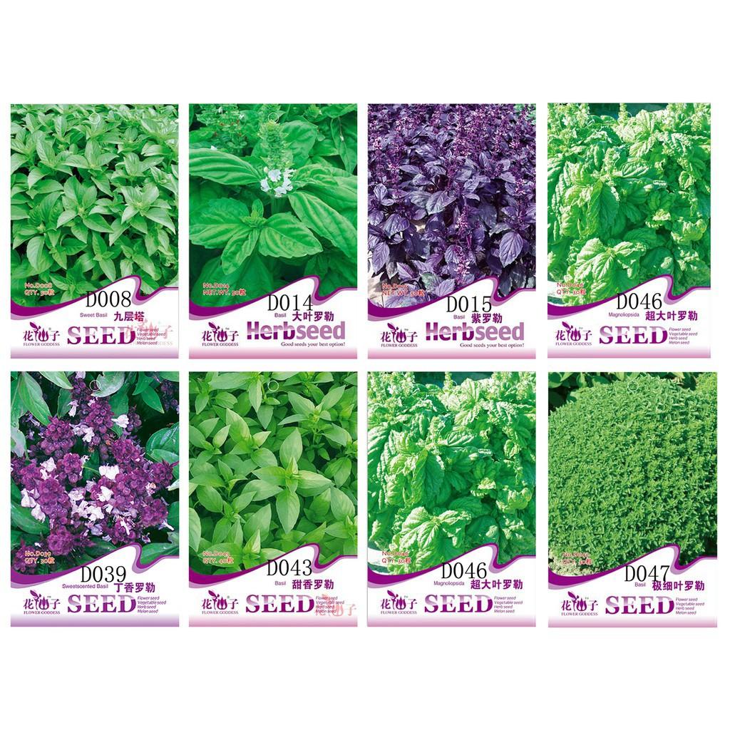 50 Seeds//Pack Purple Basil Seed Ocimum basilicum Sweet Basil Original Pack D015