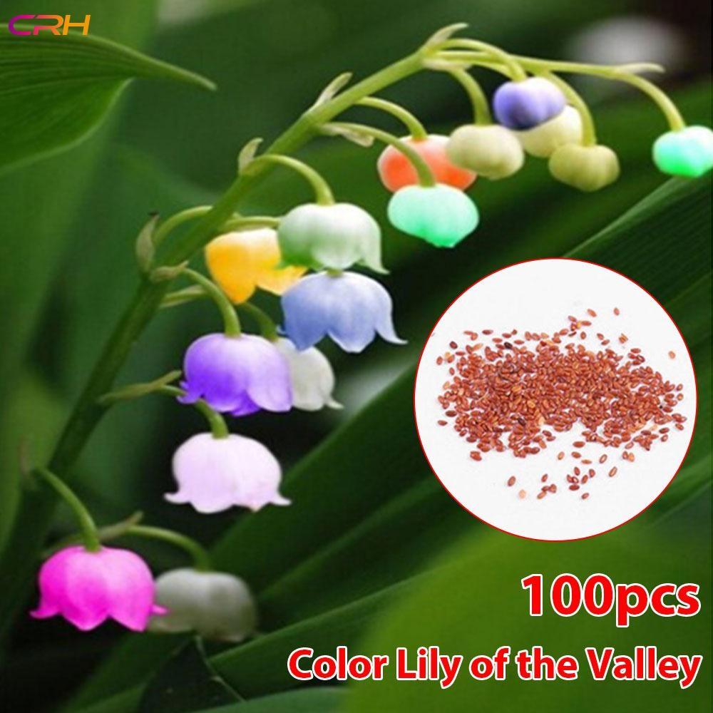 CRH Coleus Seeds Color Begonia Seeds Begonia Flower Seeds | Shopee ...
