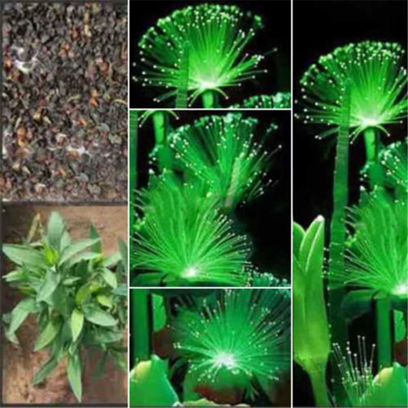 100Pcs Rare Emerald Fluorescent Flower Seeds Night Light Emitting Plants Hot