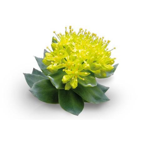 Rhodiola Rosea Powder 200g:Prevent Altitude Sickness 西藏红景天粉:预防高山症