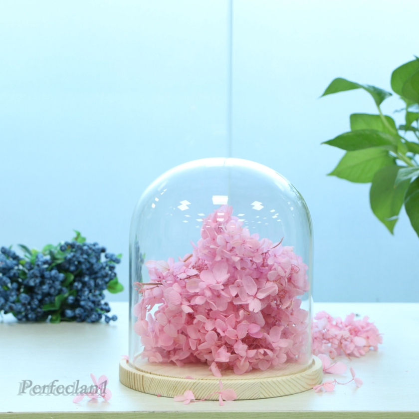 Dome Cloche Bell Jar With Wooden Base