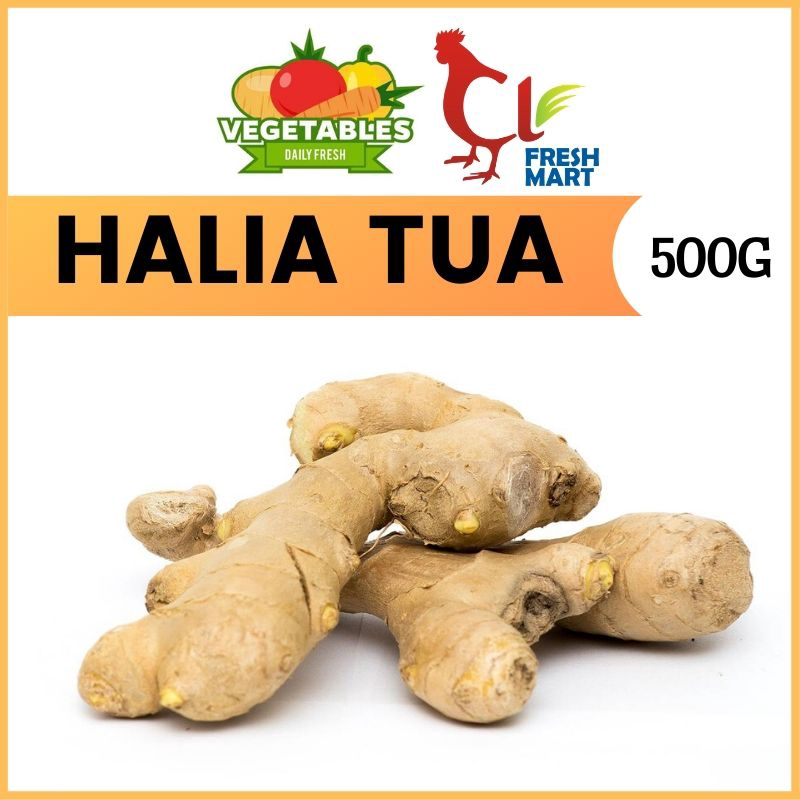 Halia Tua / Old Ginger (500g per pack) Fresh Selected