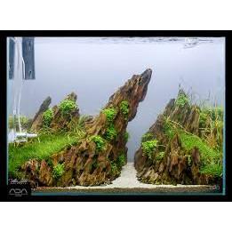 Aquascaping Stone Rock Ohko Dragon Stone Yellow Spongy Aveolate 5kg Shopee Malaysia