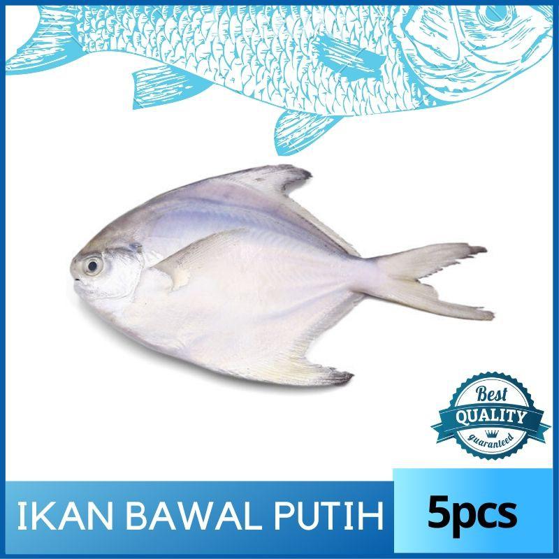 Ikan Bawal Putih (5pcs) Sedap & Inside Cleaned