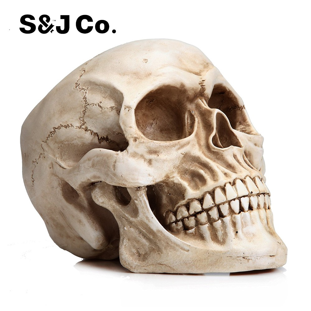 85eb6dba5b15 Halloween Decor Life Size Replica Realistic Human Skull Head Bone Model