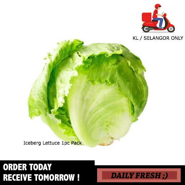Pack of 2 Artificial Iceburg Lettuce