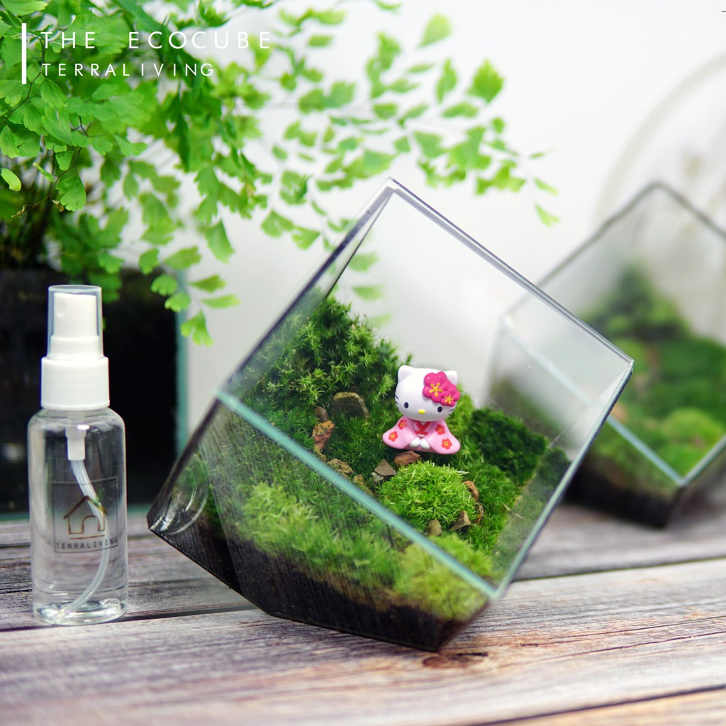 Live Moss Terrarium The Ecocube Official Licensed Product By Terraliving Shopee Malaysia