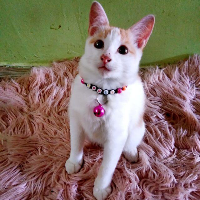 Cat Collar Name Rantai Nama Kucing Shopee Malaysia