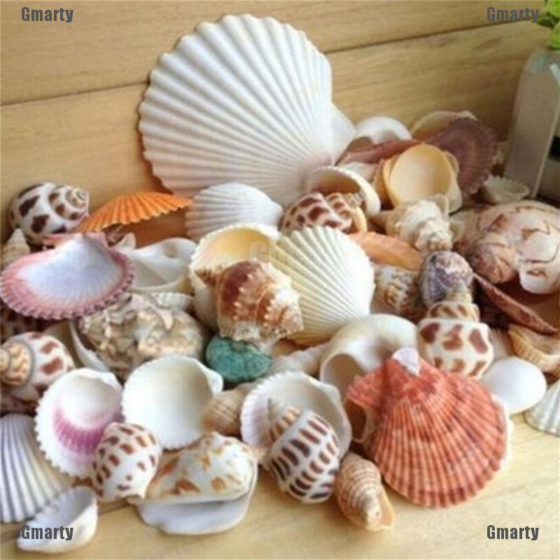 New 400g Shells Mix Shell Home Décor Shell Craft Wedding Aquarium Decoration