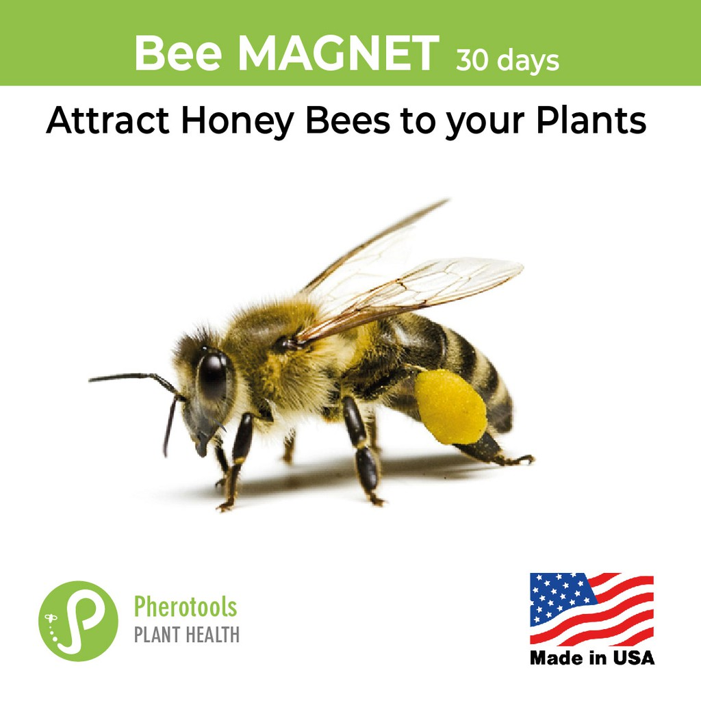 Bee Magnet 30 days Pheromone Lure to Attract Honey Bees to your plants