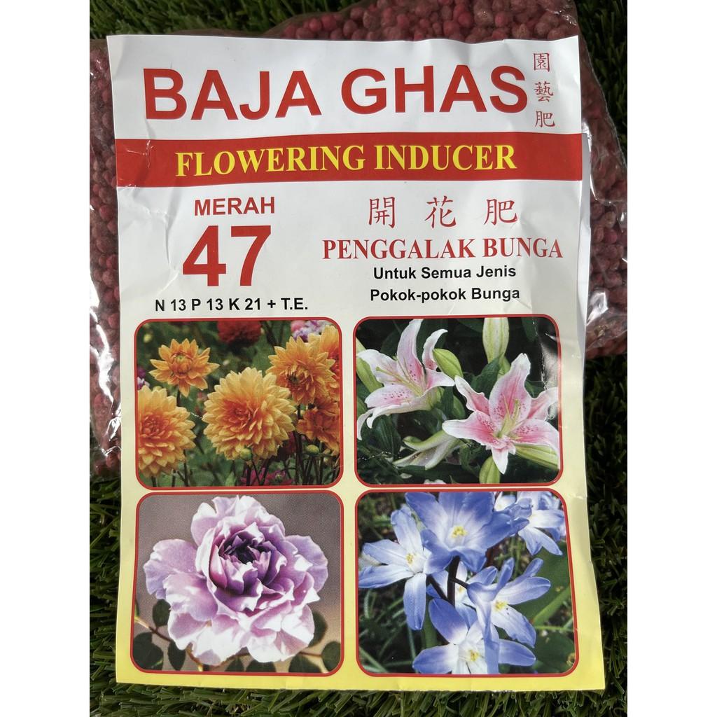 [IGL] 400G BAJA GHAS FLOWER INDUCER 47